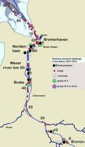 Schweinswalsichtungen in der Weser 2007-2010.- Copyright: Denise Wenger