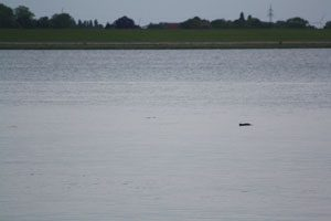 Weserwal beim Weserdeich bei Bremerhaven, M. SchönebergWeb