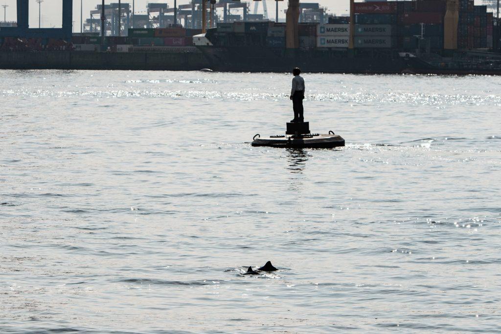 Zwei Schweinswale im Hamburger Hafen Mitte April 21